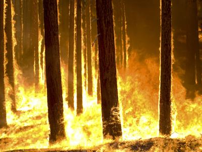 Wildfire (copy)