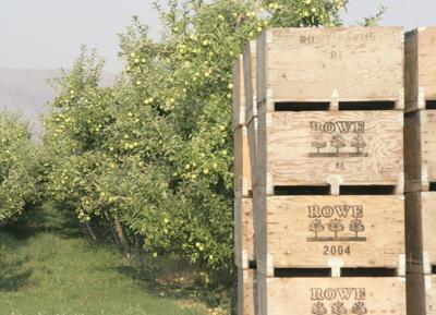 Record apple crop forecast