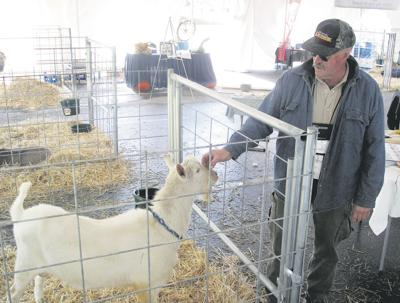 Get your goat: Demand bolsters milkers