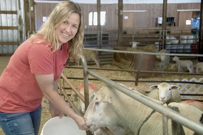 OSU Sheep Center Smallman