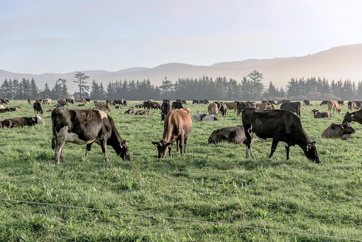 Dairy 2019 Alexandre 2