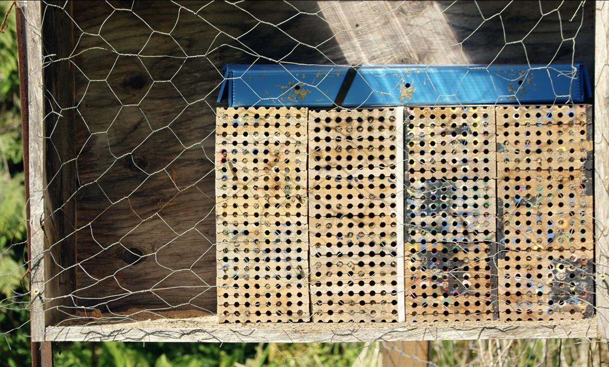Mason bee nesting cavities