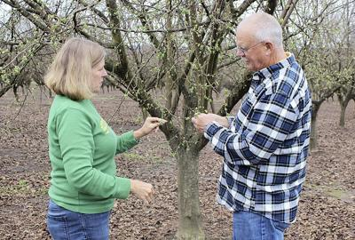 Hazelnuts prove to be perfect crop for this farm