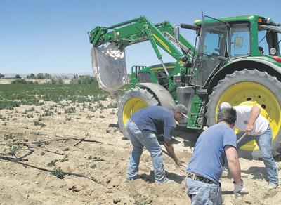 Ag unlikely to repeat 2011 production records