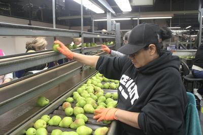 California pear forecast