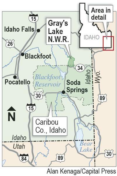 Southeast Idaho grain farmers paid to let birds be
