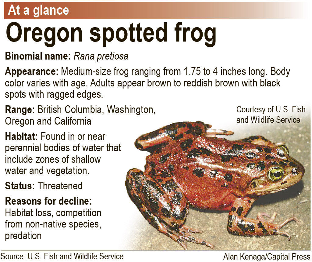 Grazing halted to study impacts on Oregon spotted frog
