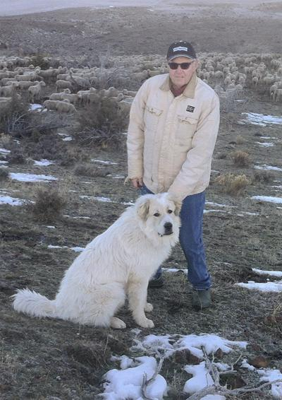 Rancher awarded $246,500 in shooting of three guard dogs
