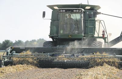Dry bean prices surge
