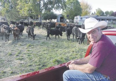 Longtime rancher eases into retirement with small herd