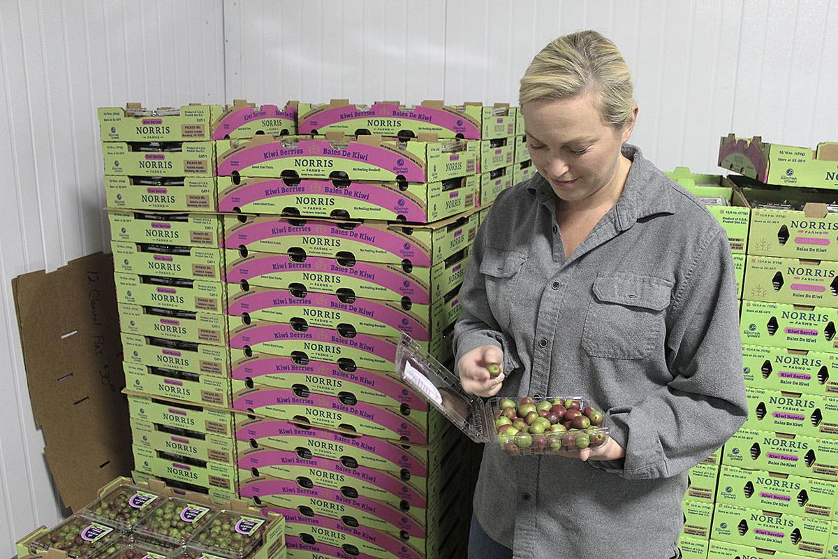 Kiwi berries 2