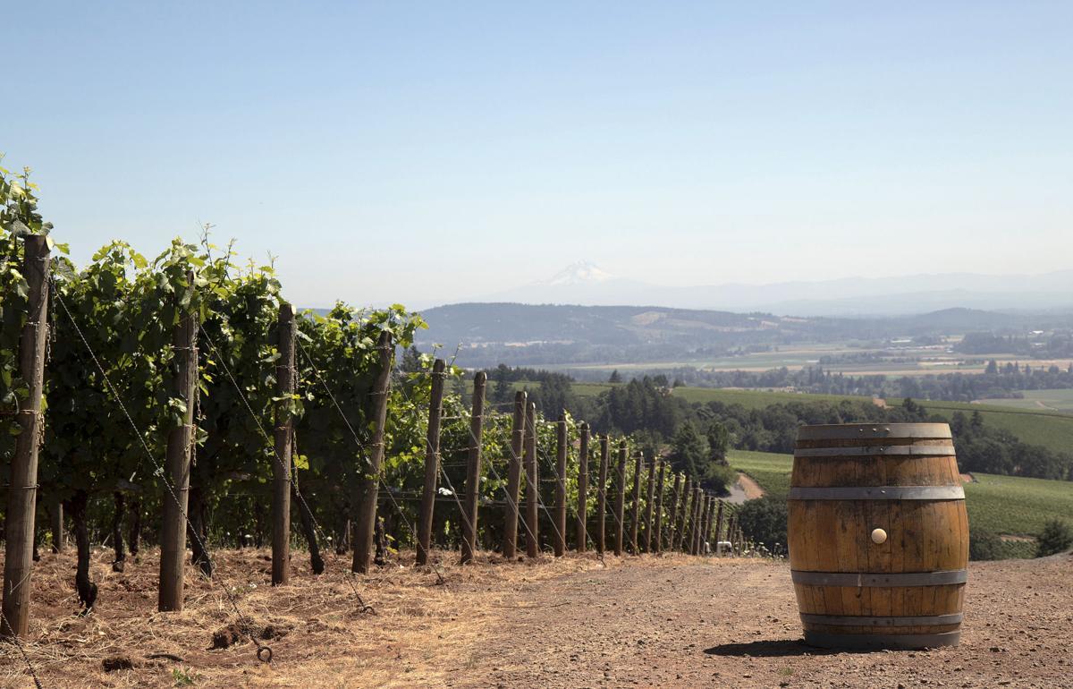 TOO Wine economy 17
