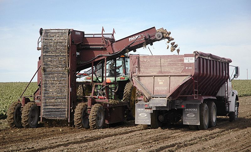 Sugars low, tonnage high in Idaho beet harvest
