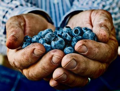 Oregon blueberry exports to S. Korea will double 2012 total