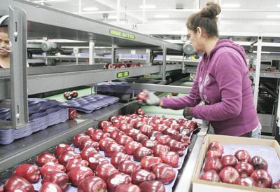 Washington apple sales