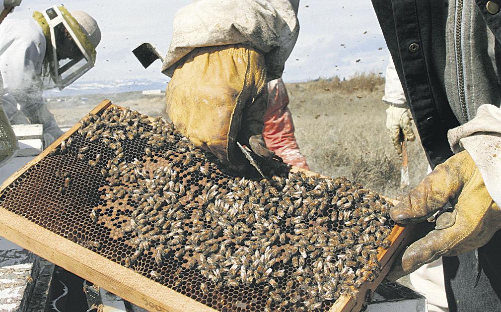 Buzz fades as hives struggle