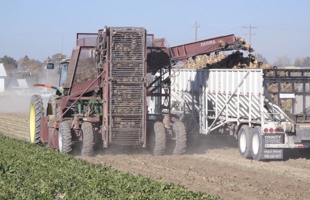 Sugar beet harvest could set records