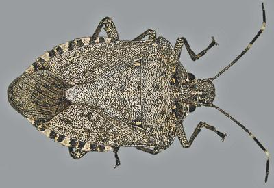 New bug threat substantial