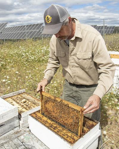 sm honey bee hive panel