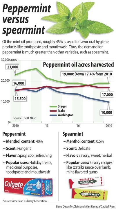 Peppermint versus spearmint