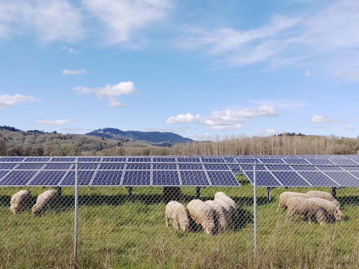 GP Solar Panels.jpg