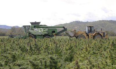 HEMP RUSH: Plenty of risk, reward possible in growing newest cash crop