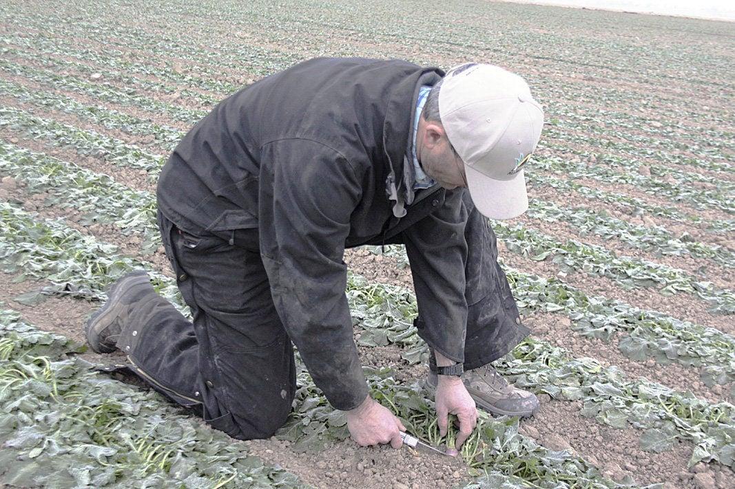 Seed grower targets organic segment, nematode resistance