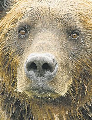 Bear alert sounded