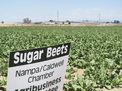 Sugar companies to launch $4 million GMO education campaign