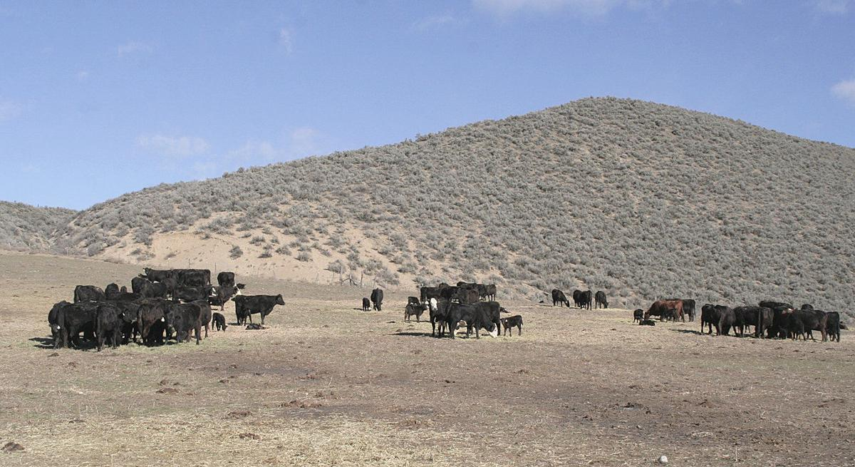 Ranchers fear Forest Service taking their grazing