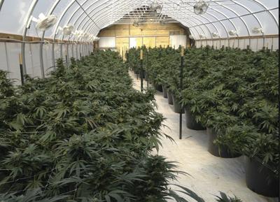 Marijuana grower smells chance to gain farm status