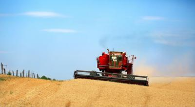 Asian wheat purchases return to normal