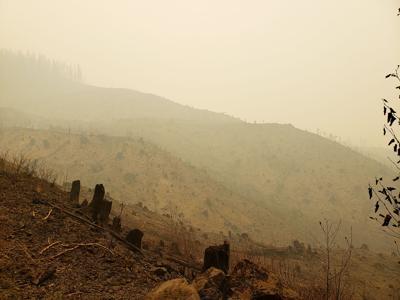 Timberland damaged by fire