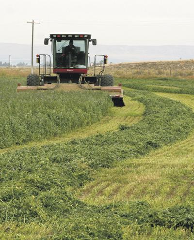 Tough weather may mean hay shortage