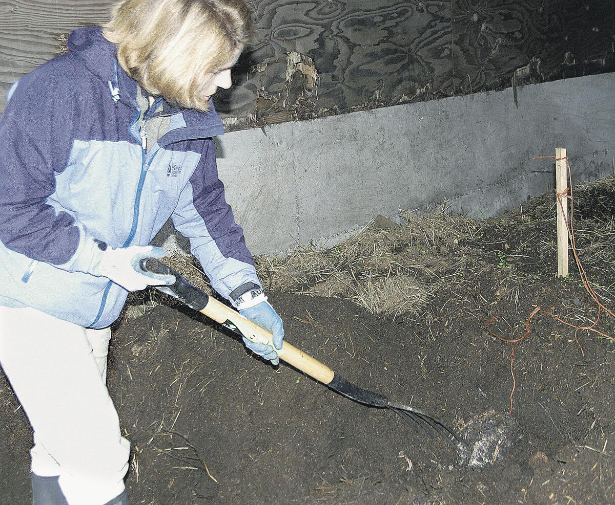 Expert: Bury carcasses