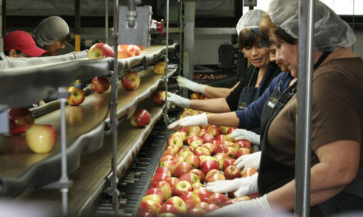 Fresh-apple crop shrinks