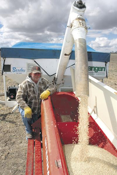 Dry bean, chickpea acres gain