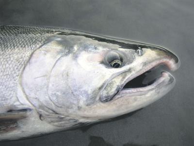 Fish, farms should coexist, activist says