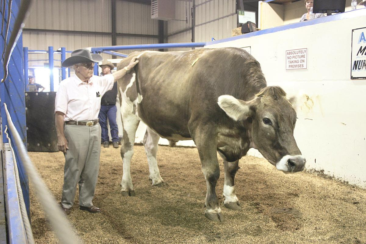 Extra-large steer named Buford stars at auction
