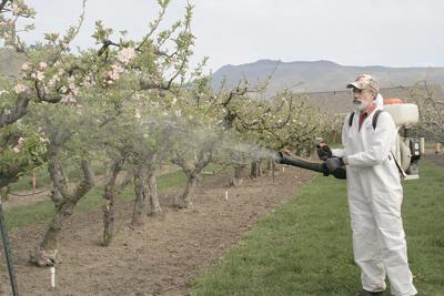 Apple growers on fire blight watch