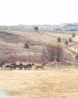 Murderers Creek wild horse plan