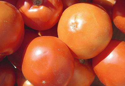 Surplus drives down processing tomato prices, acreage