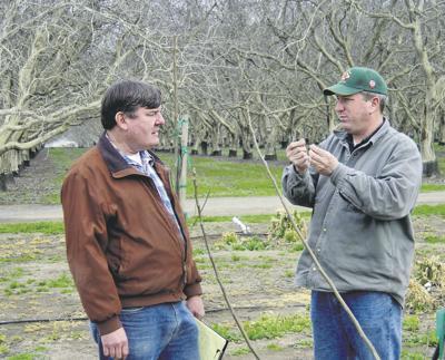Science fertilizes orchard's profit