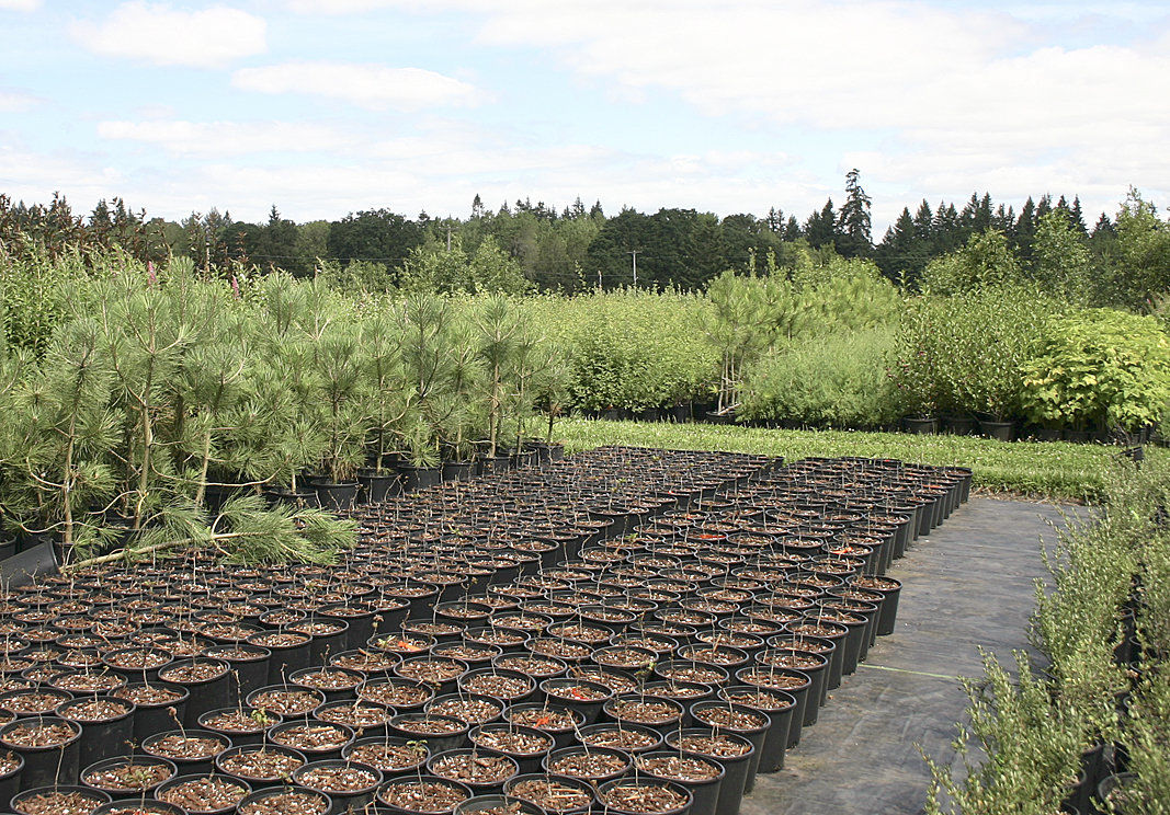 Nursery grows 400 varieties of native plants