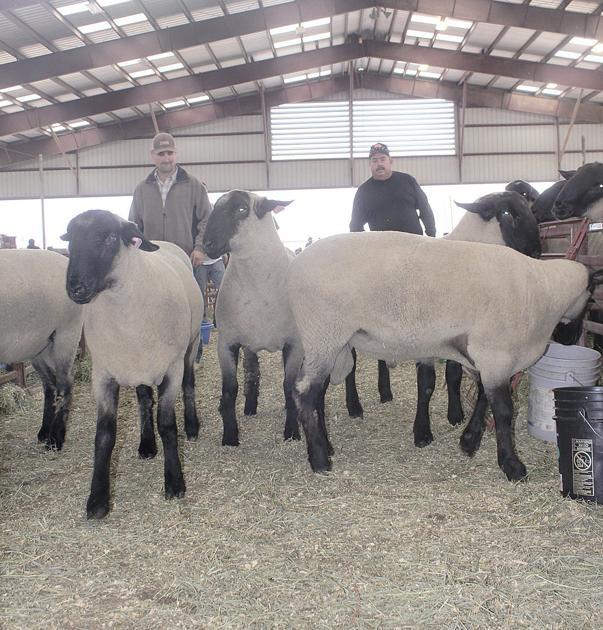 Ram sale a hit with sheep producers | California | capitalpress