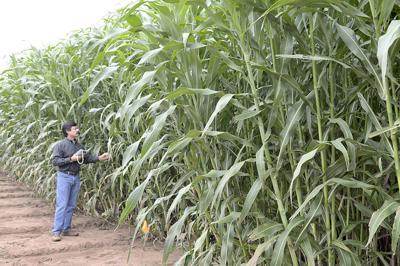 Farm cooperative buys struggling biotech developer
