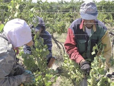 Trump policy changes don't absolve farm labor liabilities