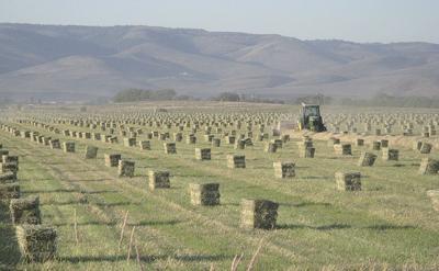 Western hay price report
