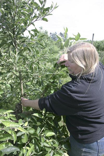 Apple Club delivers diverse varieties, taste