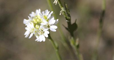 WSDA puts 10 plants up for banishment